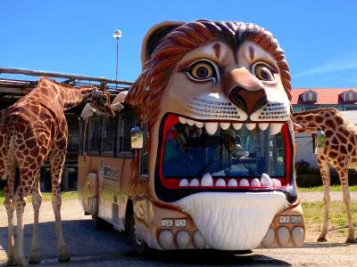 ライオンバスの画像