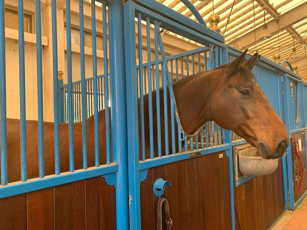 厩舎内のお馬さんの画像